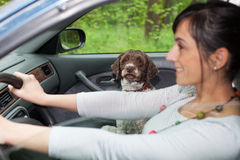Woman driving car with a dog Royalty Free Stock Images