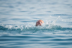 Person drowns in the water Stock Photography