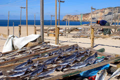 Woman drying fish in Nazare, Portugal Stock Photography