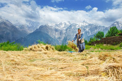 Woman drying harvest Royalty Free Stock Photo