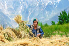 Woman drying wheat Royalty Free Stock Images