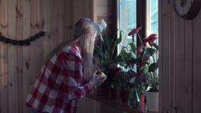 Woman dusting plant leaves in window stock video footage