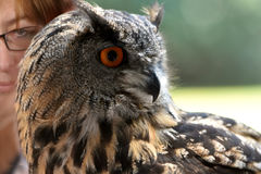 Woman and eagle owl Royalty Free Stock Photography