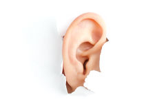 Woman ear Stock Photography
