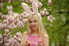 Woman with easter eggs on blossoming magnolia background. Woman with long, blond hair, with easter eggs in rosy, bunny ears on blossoming magnolia, floral stock image