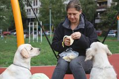 Woman eating banana on swing while her dogs watching. Older woman eating banana while her dogs watching at playground Royalty Free Stock Image