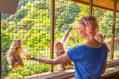 Woman eating monkey royalty free stock images