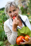 Woman eating tomatoes from garden Stock Image