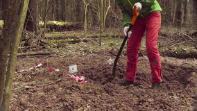 Woman ecologist in the forest digging a soil slit. With the shovel stock video footage