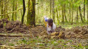 Woman ecologist in the forest digging a soil slit. With the shovel stock footage