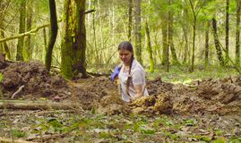 Woman ecologist in the forest digging a soil slit Stock Photography