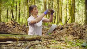 Woman ecologist in the forest digging a soil slit Royalty Free Stock Images