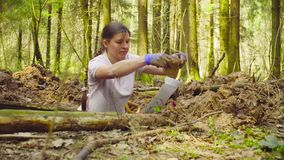 Woman ecologist in the forest digging a soil slit. Woman ecologist in the forest taking a sample of tissue from the ground and putiing it in the envelope stock footage