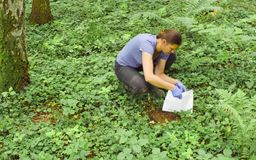 Woman ecologist taking samples of a soil