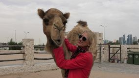 Woman embraces camel. Happy blonde woman embraces a camel in Doha city center, near Souq Waqif, the old market, popular tourist in Al Souq District, Qatar stock footage