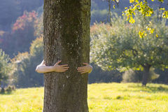 Woman embracing a tree Royalty Free Stock Images