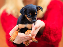 Woman embrancing her puppy dog Stock Photography