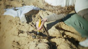 The woman is engaged in excavating bones in the sand, Skeleton and archaeological tools. 4k stock video footage