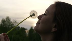 Woman enjoy fluffy dandelion flower. Touch her face by soft seed head. Girl`s face with dandelion flover against evening sky close up stock video footage