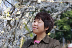 Woman enjoy the plums flower Stock Photos