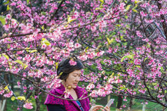 woman enjoy smart phone after selfie at park under sakura tree Royalty Free Stock Photography