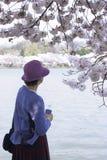 Woman enjoying blossom trees near water Stock Photography