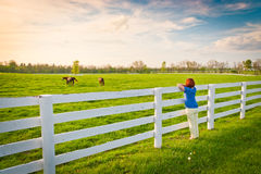 Woman  enjoying  countryside  view  with green pastures and hors Royalty Free Stock Photography