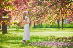 Woman enjoying her walk in park during cherry blossom season royalty free stock images
