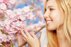 Woman enjoying scent of blooming cherry blossoms Royalty Free Stock Image