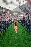 Woman enjoying spring in the green field with blooming trees. Young woman enjoying spring in the green field with blooming trees Royalty Free Stock Image