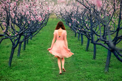 Woman enjoying spring in the green field with blooming trees Royalty Free Stock Images