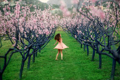 Woman enjoying spring in the green field with blooming trees Stock Image