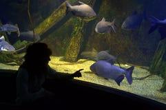 Woman enjoying underwater life Stock Photography