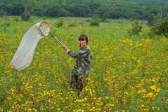 Woman entomologist 3 Stock Photos