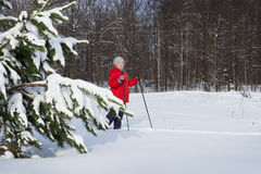 Woman,  europeans, walks in the winter forest. Woman retirement age, europeans, walks in the winter forest Royalty Free Stock Images
