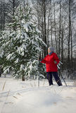 Woman, europeans, winter in the woods. Woman retirement age, europeans, winter in the woods Royalty Free Stock Image