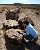 A Woman Examines a Giant Petrified Log Stock Images