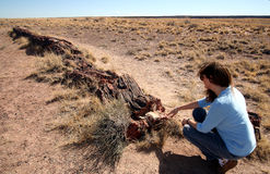 A Woman Examines a Petrified Log Royalty Free Stock Image