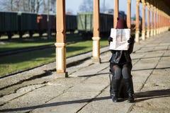 Woman examing map and train wagons Stock Photo