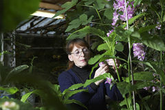 Woman Examining Flowers Stock Photo