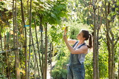 Woman examining leaves at garden center royalty free stock photography