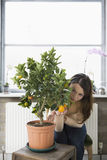Woman Examining Orange Growing On Plant Stock Photos