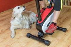 Woman on exercise bike with a white dog Stock Images
