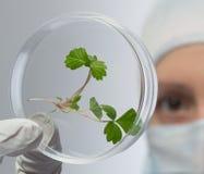 Woman explores flower on radiation Stock Photo
