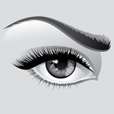 Woman eye royalty free illustration