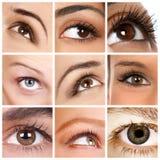 Woman eye royalty free stock photo