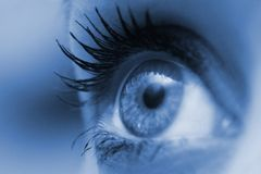 Woman eye. Beautiful feminine eye blue colour Royalty Free Stock Images