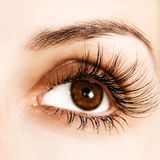 Woman eye stock photography