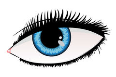 Woman eye of blue color Stock Image