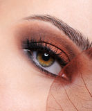 Woman eye with a brown fashion make-up Stock Photos